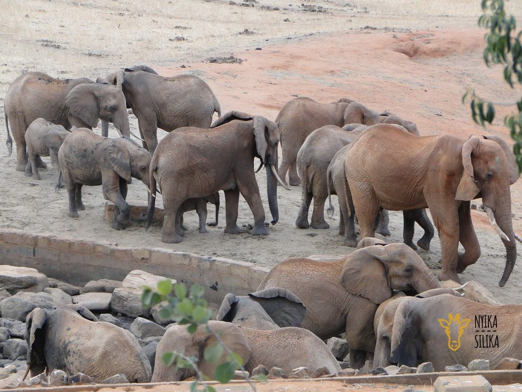 African Savannah Elephants at Tsavo East National Park