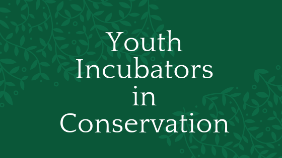 Youth incubators